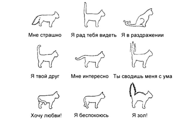 Как правильно понимать кошек